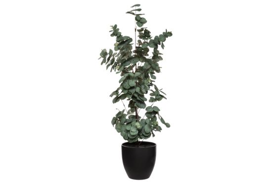 Kunstplant Eucalytus H85cm