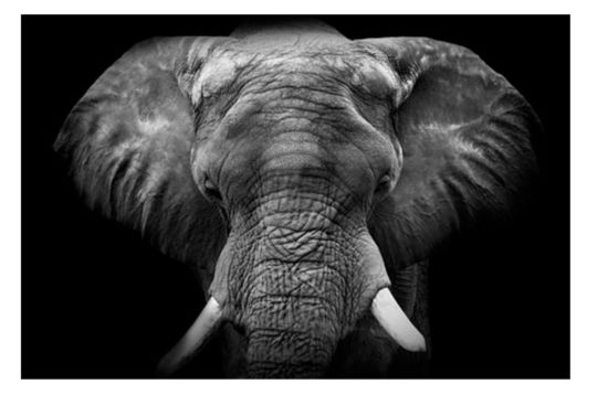 Print op glas Front olifant 100x150cm