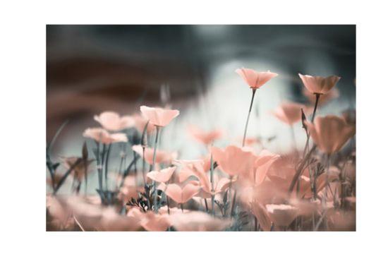 Foto op canvas Pink Flowers 60x90cm