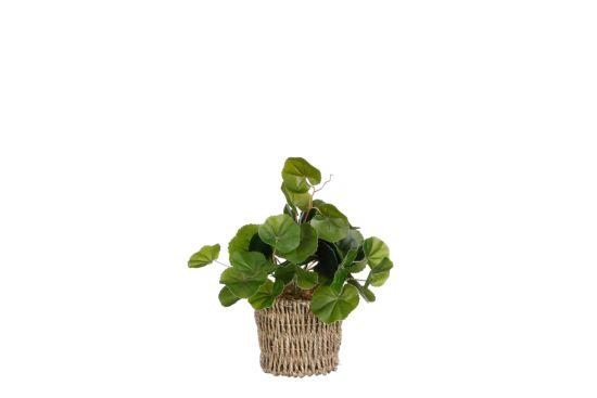 Kunstplant Pilea H33cm