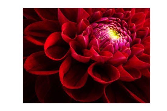 Foto op canvas Le rouge et le noir 50x70cm