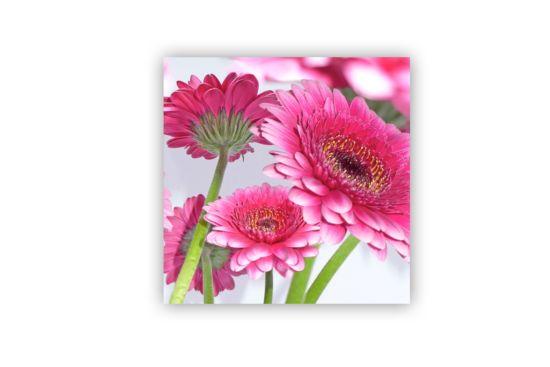 Servet Pretty in pink  33x33cm roze