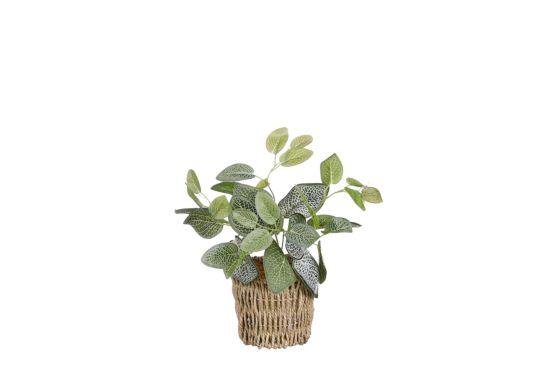 Kunstplant Fittonia  H33cm