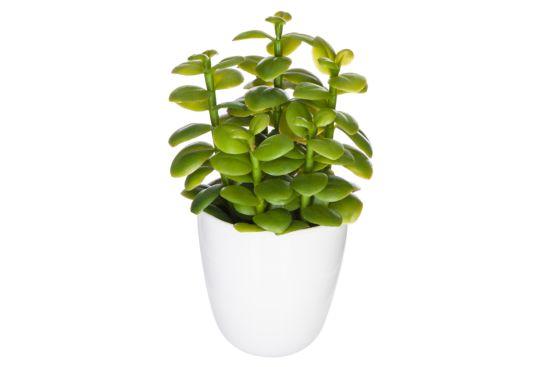 Kunstplant Cactus H18cm