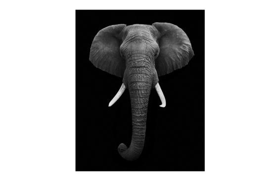 Foto op canvas Olifant front 80x120cm
