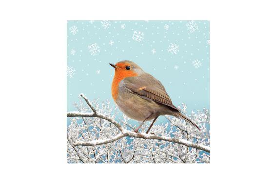 Servet Sweet Robin  33x33cm multicolor 20 stuks