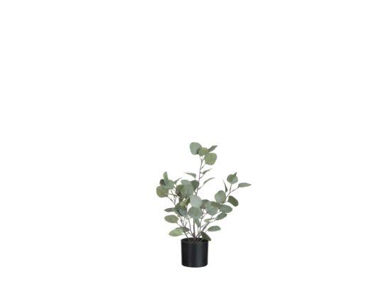 Kunstplant Eucalyptus H43cm