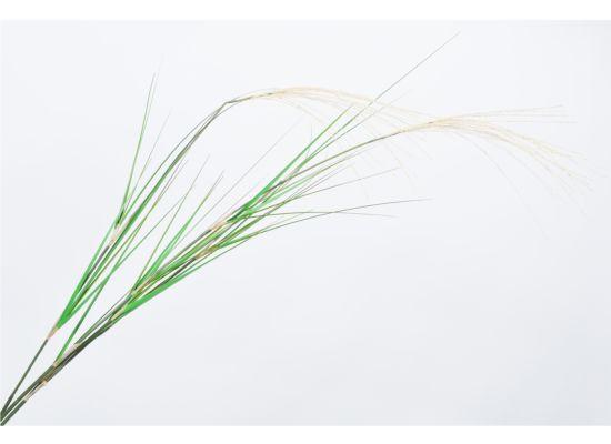 Kunsttak Grasspriet H122cm