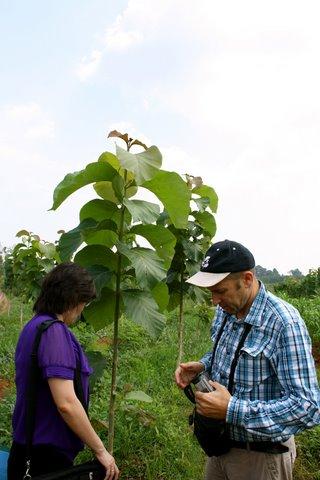 Bezoek teakplantage